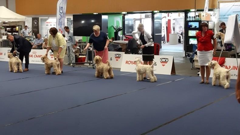 Our first European Dog Show